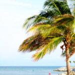 picasa mexico palm trees