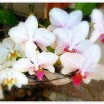 2orchids