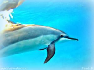 hawaiidolphins
