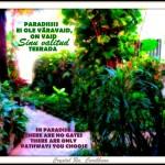 IMG_1401paradis