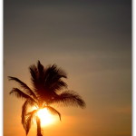 palmtreesun