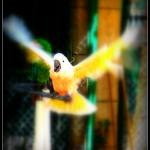 parrotflighttext