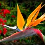 7santamonicabirdofparadise
