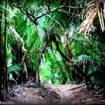 junglelovewalk