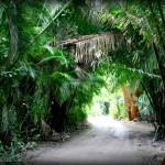 junglewalk2