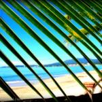 palmtreeblinders