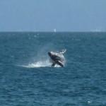 =whalesplash